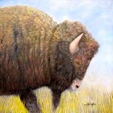 <h5>Spirit of the Plains</h5><p>Oil on Canvas $800</p>